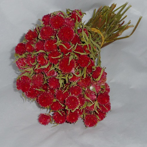 Natural Globe Amaranthus Red