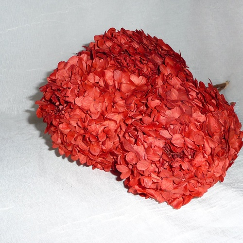 Preserved PG Hydrangea Brick Red-Discontinued