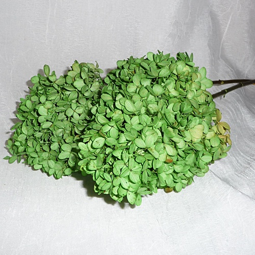 Preserved PG Hydrangea Spring Green-Discontinued