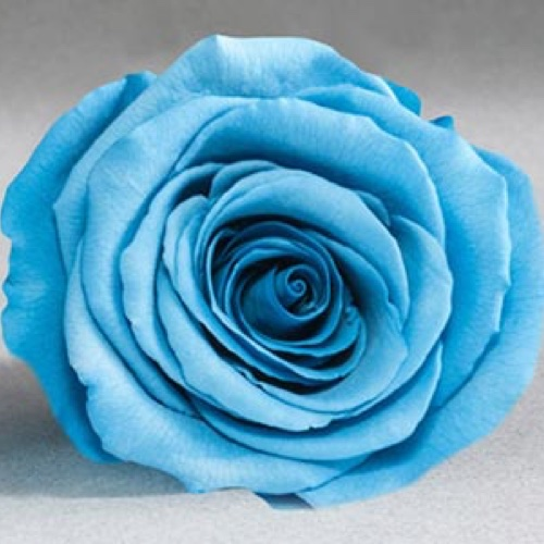 Preserved Fancy Rose Heads Blue